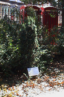 TS Eliot tree
