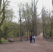 Avenue of trees - Hampstead Heath