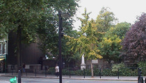 Old St Marylebone Parish Church Garden