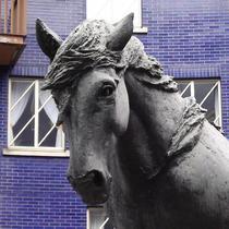 Jacob the dray horse