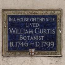 William Curtis