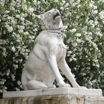 Dogs of Alcibiades - south
