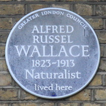 Alfred Wallace