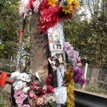 Marc Bolan shrine - tree