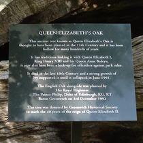 Queen Elizabeth's Oak