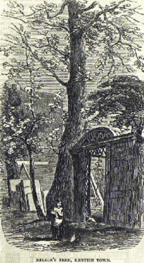 Nelson's Tree
