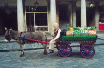 donkeys of Covent Garden