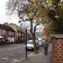 Basil Marsden Smedley - Dovehouse Street