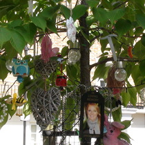 Annette Fennessy tree