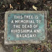 Hiroshima tree - Furnivall Gardens