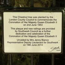 Coronation tree - Southwark Park