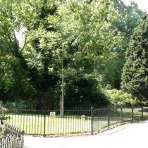 Ada Salter Garden - tree
