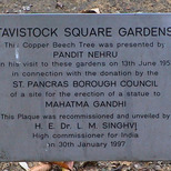Pandit Nehru tree