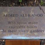 Kanoo's tree