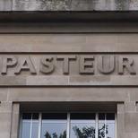LSHTM - Pasteur