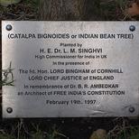 B R Ambedkar - tree
