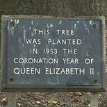 Coronation tree - Lincoln's Inn Fields