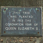 Coronation tree - Lincoln's Inn Fields