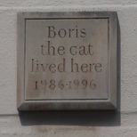 Boris the cat