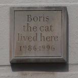 Boris the cat