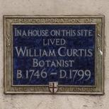 William Curtis