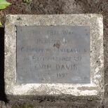 Kevin Davis tree