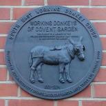 Covent Garden donkeys