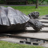 Tortoises with triangle and time