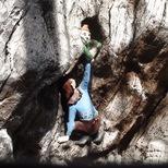 Elfin Oak