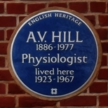 A. V. Hill