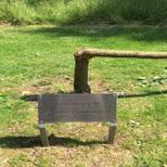 Barbirolli tree