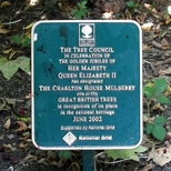Charlton House mulberry tree - 1